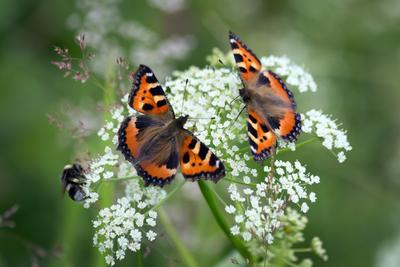 Со свиданьицем! природа,бабочки, лето,цветы,насекомые,макро
