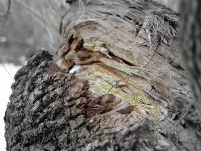 *** дерево ...
