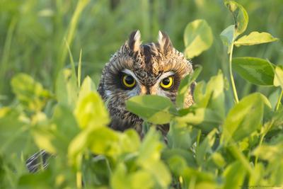 Взгляд сова