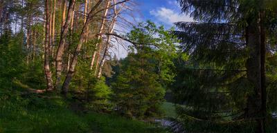 Утро на Керженце пейзаж лес утро панорама