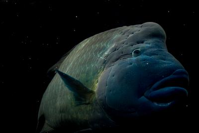 Космический обитатель рыба