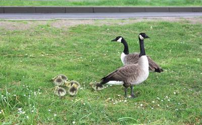 Семейка на прогулке