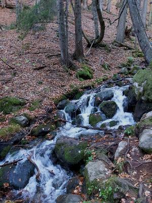 Осень в горах Бурный горный поток шумливый веселый осень