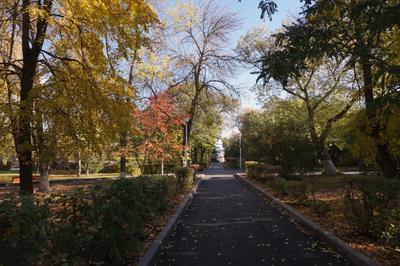 Октябрь Пейзаж осень октябрь парк аллея