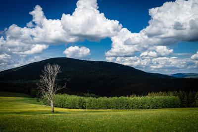 Один в поле не воин луг горы дерево поле ели одиночество