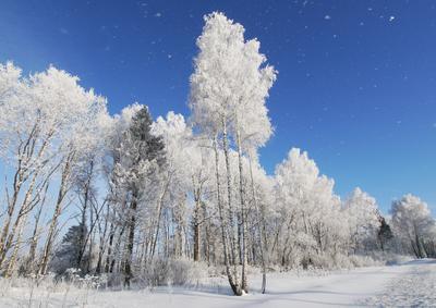 Волшебство зимы зима иней деревья морозко
