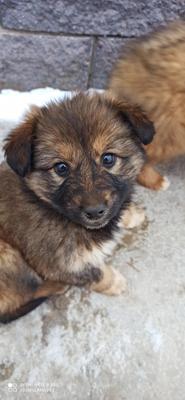 Бездомный щенок щенок собака