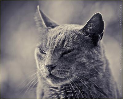 Анатомия имени Бастис. кот Бастис сидит как египетская статуэтка Cat Bastis Mexico