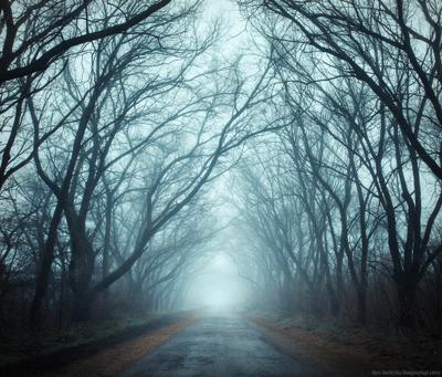 The Forest пейзаж украина хортица лес туман утро