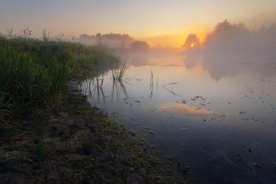 Берег реки на рассвете пейзаж природа туман река волчья