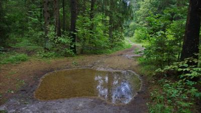Ивановка. Лесная дорога. Bryansk Ivanovka Forest Track woods VladimirPochtarev Брянск Ивановка Лес дорога деревья