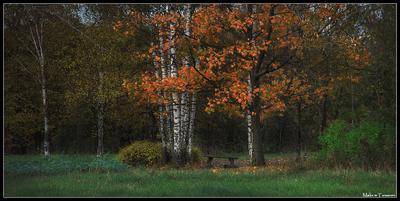 Осень осень клён