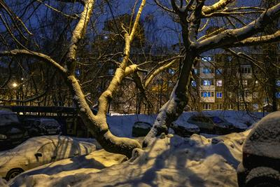 Жить не просто во дворе ... зима двор вечер огни дерево