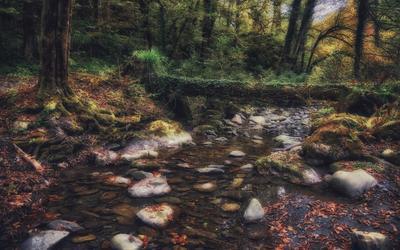 У лесного ручья...