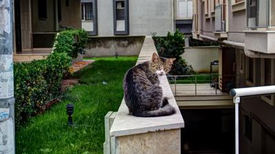 Стамбульский кот ) Стамбул кот