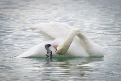 Йога Лебедь, море