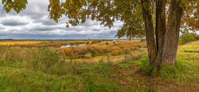 В осенних красках. липа поле трава осень