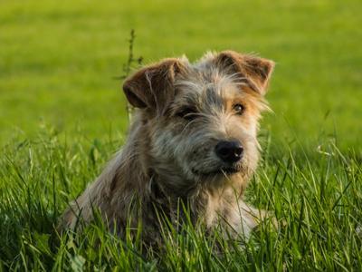 Пёс с радостью в глазах пес собака животное дворняга газон трава лужайка зелень радость
