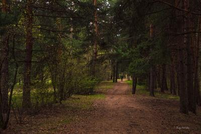 Прогулка в лесу.***