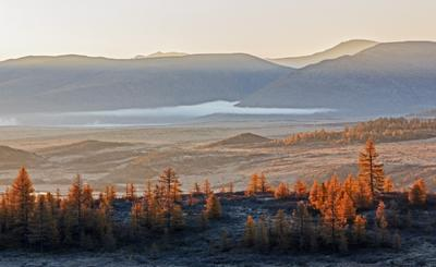 Как из распадка стелется туман ... утро туман лиственица