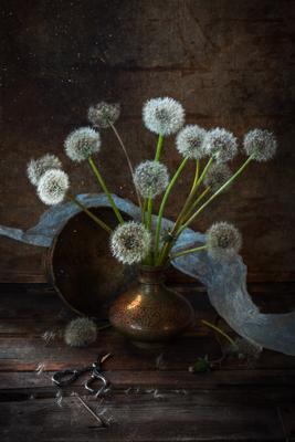 Дыхание ветра Одуванчик весна май пылинки натюрморт