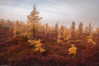"""""""Желтое на красном"""" Колыма Дальний Восток Магаданская область краски осени осень туман"""