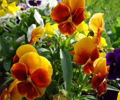 Городские цветы...