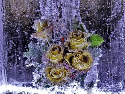 * Цветы для Снежной Королевы * цветы букет лед