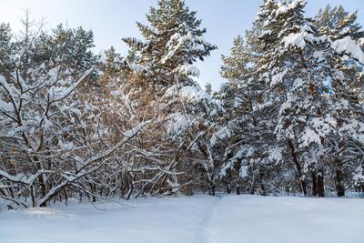 Снежный пейзаж зима пейзаж снег