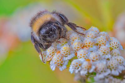 пчела пчела насекомое природа цветы