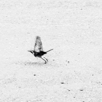 Bird птица bird