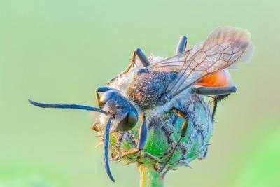 утро утро насекомое пчела оса