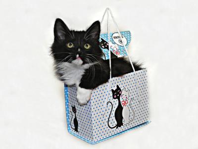 Подарок кот маркиз подарок коробка