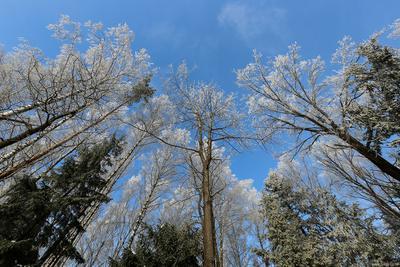 Изморозь. снег зима лес деревья мороз
