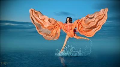 прогулки по воде прогулки вода бежать крылья