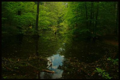 дальше в лес лес зелень озеро
