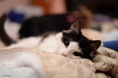 Маленький котик. Кот котик кошечка животное любимчик