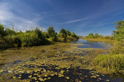 В августе на речке летний пейзаж река