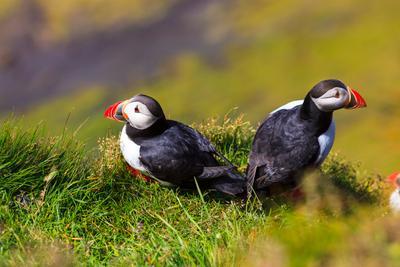 ***Рай для тупиков Тупики Исландия