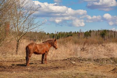 Размышления после зимы лошадь весна