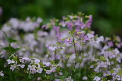 Цветочки весна природа вдохновение