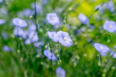Лето цветение сад лето