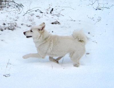 50 оттенков белого собака снег зима
