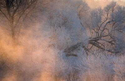 В морозном тумане утро зима рассвет пейзаж