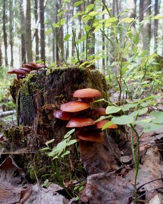 *** лес лето грибы