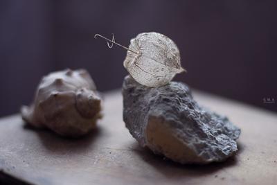 трио фактур камни ракушка физалис