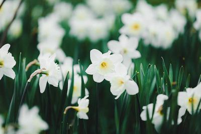 *** spring