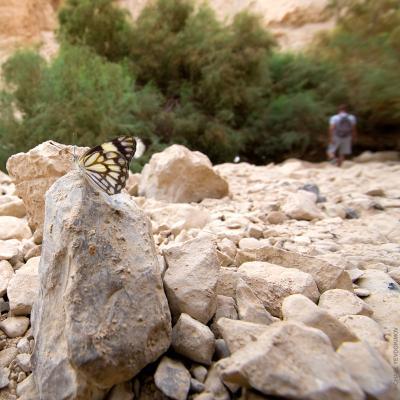 Мы (из серии Израильские зарисовки) Эйн Бокек, Ein Bokek, En Boqeq, Израиль, Israel, Мертвое море, Dead Sea, бабочка, человек, камни