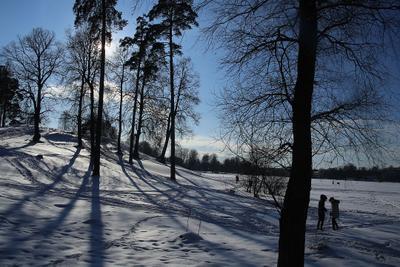 Озерки, сказка Питера зимой и летом. недавний свежий снег контражур