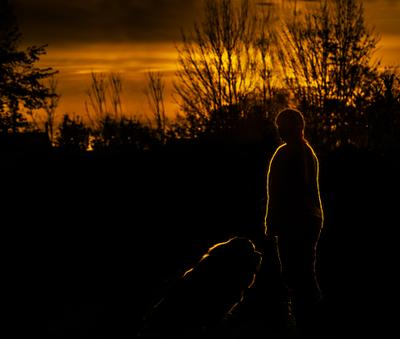 Вечерняя прогулка. закат собака прогулка